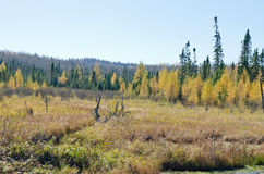 Northern Ontario Forest Royalty Free Stock Images