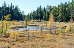 Northern Ontario Forest Stock Images