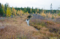 Northern Ontario Forest Stock Photography