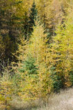 Northern Ontario Forest Royalty Free Stock Photos