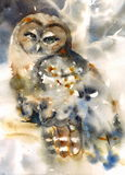 Northern Owl Bird Watercolor Winter Illustration Hand Painted. Hand painted Watercolor illustration of Northern Owl Royalty Free Stock Photography