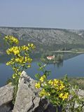 Broom bush in front of the lake Visovacko jezero. In the northern part of the lake Visovacko jezero lies the island Visovac with the Franciscan monastery, which Stock Photography