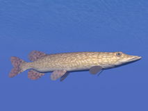 Northern pike fish underwater - 3D render Royalty Free Stock Images