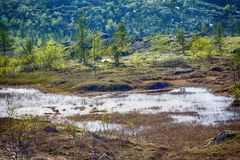 Northern polar mountain tundra landscape. With marshland in summer Stock Image