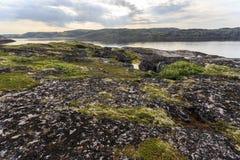 Northern polar summer. Coastline of Barents sea, Arctic ocean, Kola Peninsula, Russia