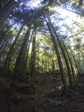 Northern Rain forests. In BC Stock Photo