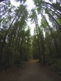 Northern Rain forests. In BC Stock Photos