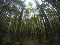 Northern Rain forests. In bc Stock Images