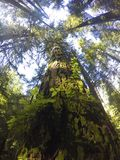 Northern Rain forests. In BC Stock Photography