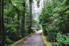 Northern Rain forests. IN bc Royalty Free Stock Photography