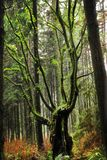 Northern Rain forests. In BC Royalty Free Stock Image