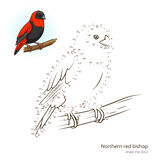 Northern red bishop bird learn to draw vector Royalty Free Stock Photo