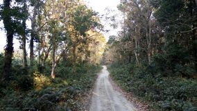 Forest in North Bengal Stock Image