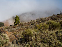 Northern slope of volcano Teide Royalty Free Stock Photography