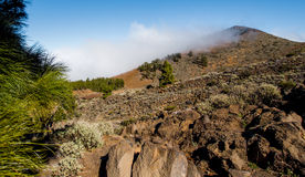 Northern slope of volcano Teide Stock Photography