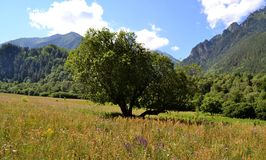 On the northern slopes of the greater caucasus. Photo taken on: July 27 Saturday, 2013 Stock Images