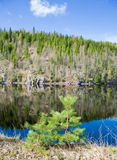Northern spring - forest lake Royalty Free Stock Photos