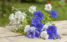 Northern summery bouquet. Of cornflowers and flax capsules Stock Image