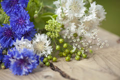 Northern summery bouquet. Of cornflowers and flax capsules Stock Photography