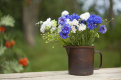 Northern summery bouquet. Of cornflowers and flax capsules Royalty Free Stock Image