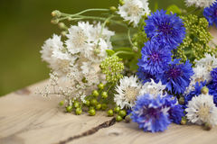 Northern summery bouquet. Of cornflowers and flax capsules Stock Photos