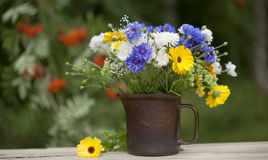 Northern summery bouquet. Of cornflowers,  flax capsules and marigold Royalty Free Stock Photography