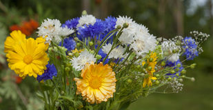 Northern summery bouquet. Of cornflowers,  flax capsules and marigold Stock Photo