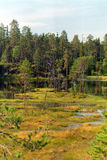 Northern swamp Royalty Free Stock Photos