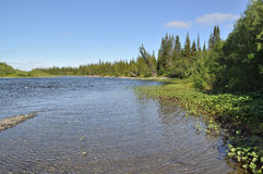 Northern taiga river on a Sunny day. Royalty Free Stock Image