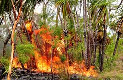 Northern territory bushfire. Natural fires in the top end of australia Royalty Free Stock Image