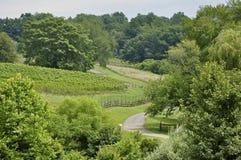 Northern Virginia vineyard land Stock Photo