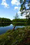 Northern Wild. A wilderness view of a forest up in northern Canada with trees, bright blue skies and a reflecting lake Stock Photos