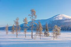 Northern winter landscape - pine trees, forest and mountain. Cowered snow, beautiful and sunny winter weather Stock Photography
