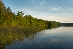 Northern Wisconsin Lake. A beautiful northwoods Wisconsin lake with the trees and shoreline wonderfully brightened by a setting sun royalty free stock photography