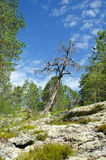 Northern wood. Landscape with pine forests in the mountains in summer stock photos