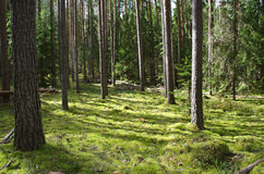 Northern wood Royalty Free Stock Photography
