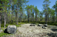 Northern wood in Karelia Stock Images
