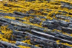 The northernmost part of continental European Russia. Rybachy Peninsula. Kola Peninsula. The northernmost part of continental European Russia Royalty Free Stock Photography