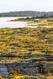 The northernmost part of continental European Russia. Rybachy Peninsula. Kola Peninsula. The northernmost part of continental European Russia Stock Images