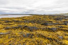 The northernmost part of continental European Russia. Rybachy Peninsula. Kola Peninsula. The northernmost part of continental European Russia Royalty Free Stock Image