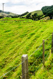Northland Hills. Landscape of green hillls at the east side of Northland, North Island, New Zealand Stock Photos