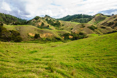 Northland Hills. Landscape of green hillls at the east side of Northland, North Island, New Zealand Royalty Free Stock Image