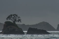 Northland. View of the ocean shore at the east side of Northland, North Island, New Zealand Stock Photography
