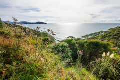 Northland. View of the ocean shore at the east side of Northland, North Island, New Zealand Royalty Free Stock Photos