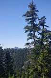 Northshore Mountains. Seen from slopes of Dam Mountain, BC, Canada Royalty Free Stock Image