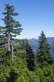 Northshore Mountains. Seen from slopes of Dam Mountain, BC, Canada Stock Images