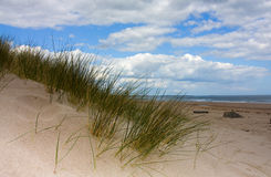 Northumberland Coast. Sand dunes and grass Cresswell beach Northumberland North East England Stock Image