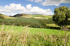 Northumberland hills. The rolling hills of Northumberland National Park with distant hillfarm Royalty Free Stock Images