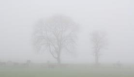 Northumberland mgła Obrazy Royalty Free