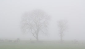 Northumberland mist. Misty trees in the fog giving an ethereal quality Royalty Free Stock Images